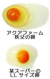 compater_egg01